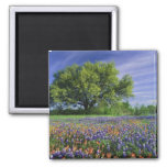 Live Oak & Texas Paintbrush, and Texas 2 Inch Square Magnet