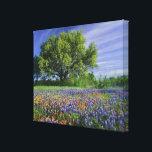 "Live Oak &amp; Texas Paintbrush, and Texas Canvas Print<br><div class=""desc"">Live Oak &amp; Texas Paintbrush,  and Texas Bluebonnets in Texas Hill Country � Adam Jones / DanitaDelimont.com</div>"