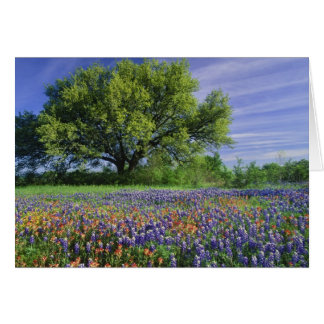 Live Oak & Texas Paintbrush, and Texas Card
