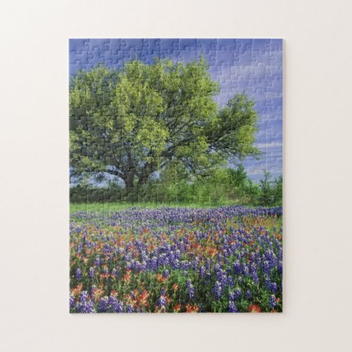 Live Oak  Texas Paintbrush and Texas Jigsaw Puzzle