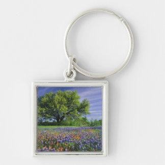 Live Oak & Texas Paintbrush, and Texas Keychain