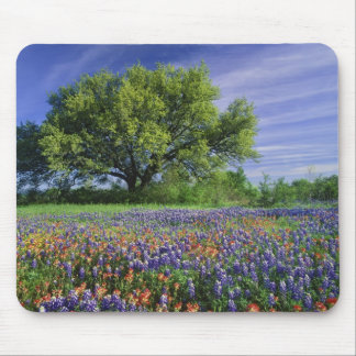 Live Oak & Texas Paintbrush, and Texas Mouse Pad
