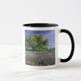 Live Oak & Texas Paintbrush, and Texas Mug