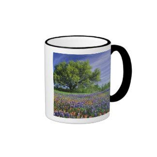Live Oak & Texas Paintbrush, and Texas Coffee Mug