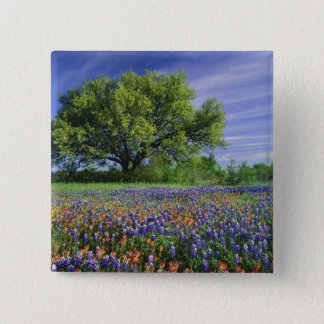 Live Oak & Texas Paintbrush, and Texas Pinback Button
