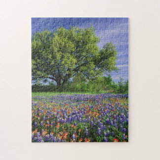 Live Oak & Texas Paintbrush, and Texas Puzzle