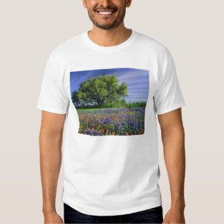 Live Oak & Texas Paintbrush, and Texas T-Shirt