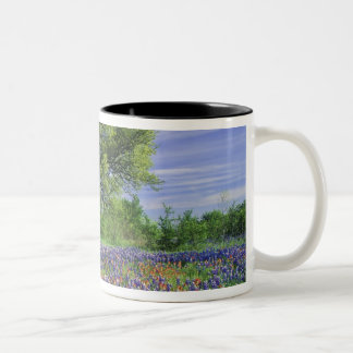 Live Oak & Texas Paintbrush, and Texas Two-Tone Coffee Mug