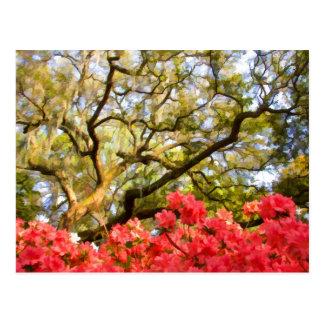Live Oak Tree and Azaleas Post Cards