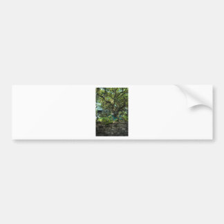 Live Oak Tree and Classic Bicycle Bumper Sticker