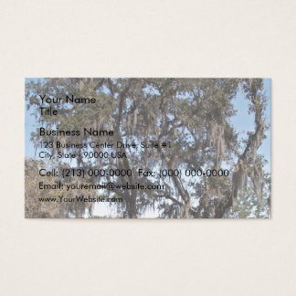Live oak tree in river banks against the blue sky business card