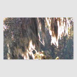 Live Oak Tree with draping Spanish Moss Rectangular Sticker