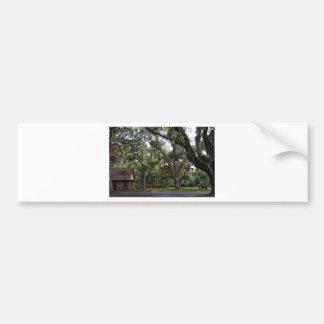 Live Oak Tree With Spanish Moss Bumper Sticker