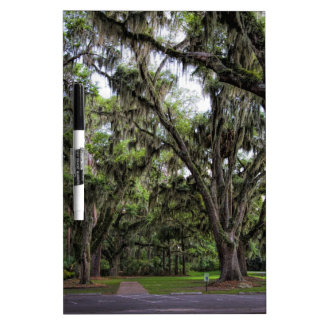 Live Oak Tree With Spanish Moss Dry-Erase Board
