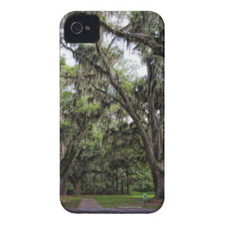 Live Oak Tree With Spanish Moss iPhone 4 Covers