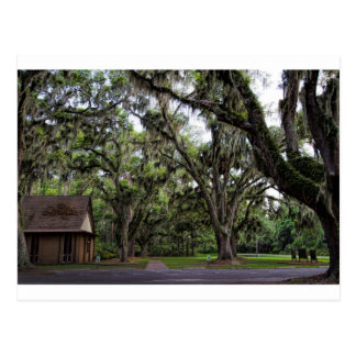Live Oak Tree With Spanish Moss Postcard