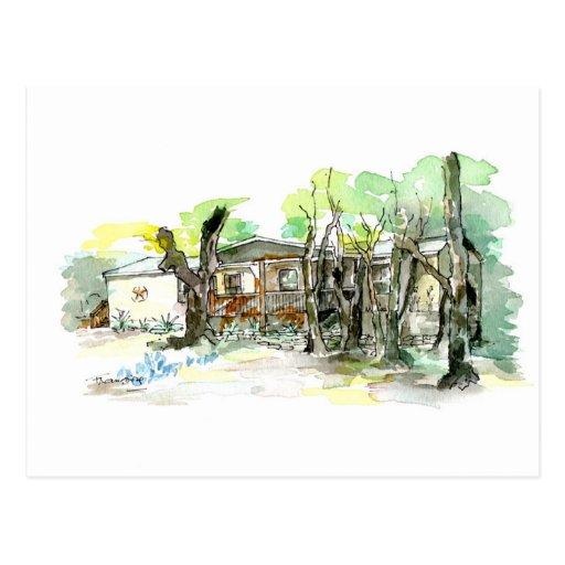 Live Oak v.1 Postcard
