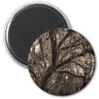 Live Oak y musgo español en tonos de la sepia Imán Redondo 5 Cm