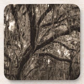 Live Oak y musgo español en tonos de la sepia Posavasos