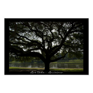 Live Oaks -  Louisiana Poster Print