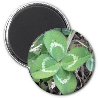Live Real 4 Leaf Clover Photo Magnets