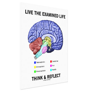 Live The Examined Life Think & Reflect (Brain) Canvas Print