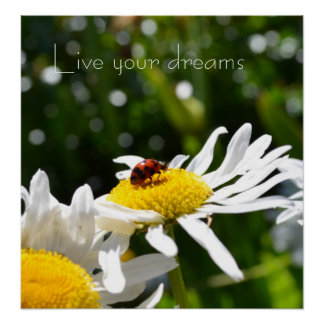 Live your Dreams Ladybug and Daisy Poster
