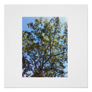 Live Your Life Tree Poster