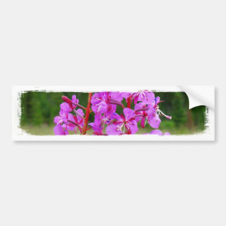Lively Fireweed Car Bumper Sticker