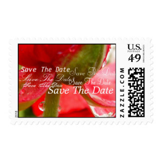 Lively Red Postage