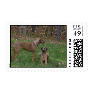 Liver and Black Beauty Postage