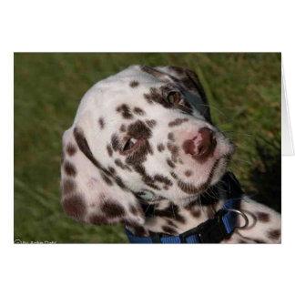 Liver Dalmatian Puppy Card