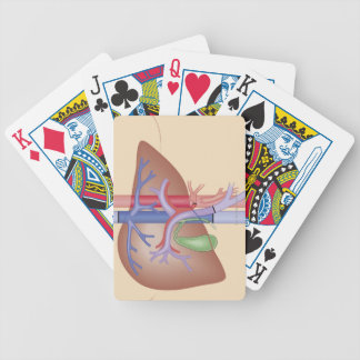 Liver Transplant Procedure Bicycle Playing Cards