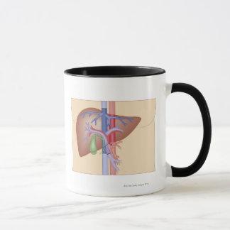 Liver Transplant Procedure Mug