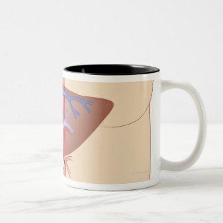 Liver Transplant Procedure Coffee Mugs