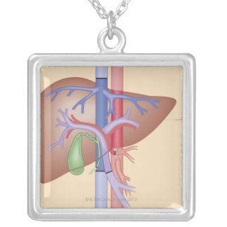Liver Transplant Procedure Silver Plated Necklace