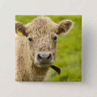 Livestock in a pasture pinback button