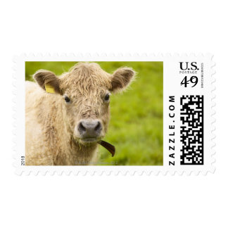 Livestock in a pasture postage stamp