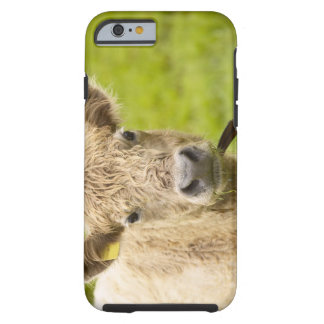 Livestock in a pasture tough iPhone 6 case
