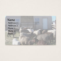 Livestock Lunchtime Business Card