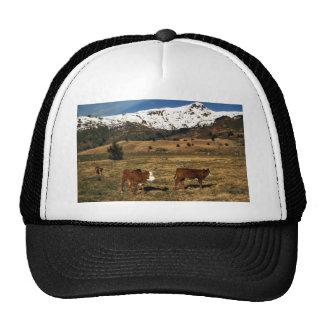 Livestock on Kodiak Mesh Hat