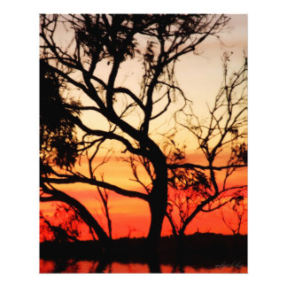 Living Art Sunset Silhouette Photo