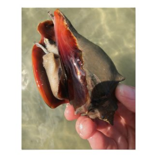 Living Fighting Conch Seashell Poster