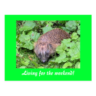 Living for the weekend! postcard