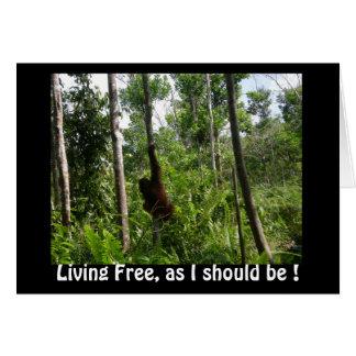 Living Free Orangutans in Borneo Jungle Card
