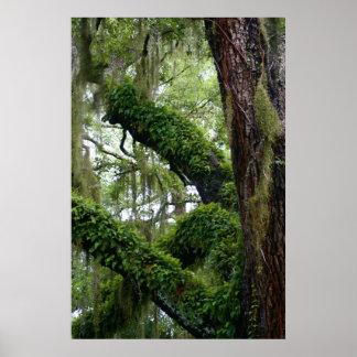 Living Oak Poster