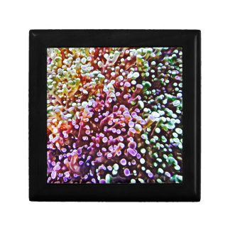 Living Reef Jewelry Box