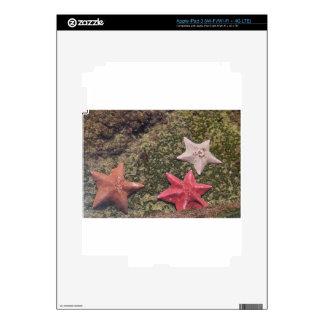 Living starfish (4).JPG Skins For iPad 3