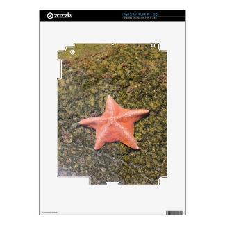 Living starfish.JPG Skin For iPad 2