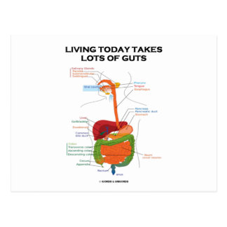 Living Today Takes Lots Of Guts (Digestive System) Post Cards